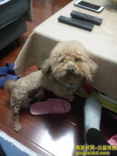 寻狗网,泰迪母狗,叫柠檬,交大卡布里城后门走丢,有酬谢,它是一只非常可爱的狗狗,希望狗狗早日回家,不要变成流浪狗。