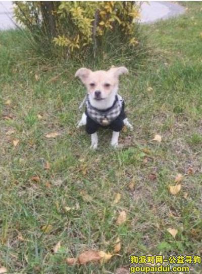 寻狗启示怎么写,各位大佬,帮忙找找,他对于我真的很重要,他就是我的家人,谢谢了,它是一只非常可爱的狗狗,希望狗狗早日回家,不要变成流浪狗。