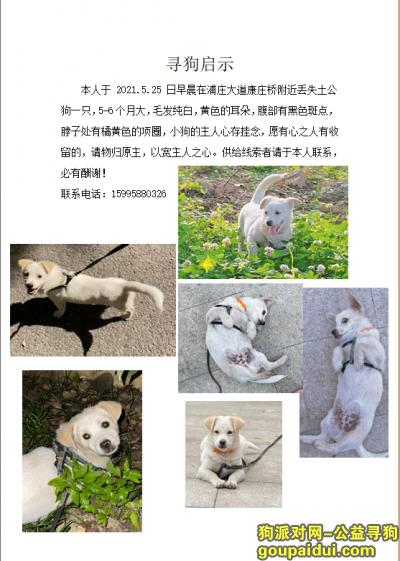 苏州丢狗,2021.5.25日早晨在浦庄大道康庄桥附近丢失土公狗一只,必有酬谢,它是一只非常可爱的宠物狗狗,希望它早日回家,不要变成流浪狗。