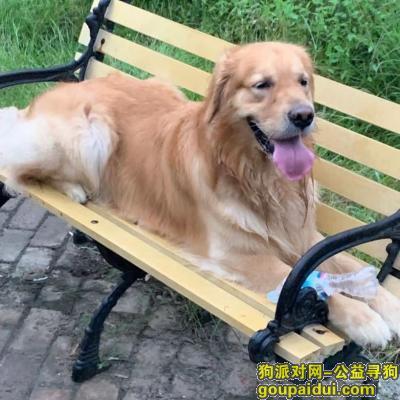 济南寻狗启示,寻金毛犬,济南高新东区春秀路南段万科如园西北范围,孙村,它是一只非常可爱的宠物狗狗,希望它早日回家,不要变成流浪狗。