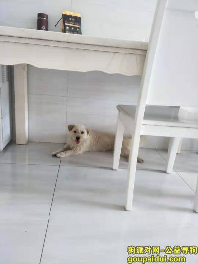 常州找狗,江苏常州金坛区后阳小狗走丢,叫来福,很有感情,它是一只非常可爱的宠物狗狗,希望它早日回家,不要变成流浪狗。