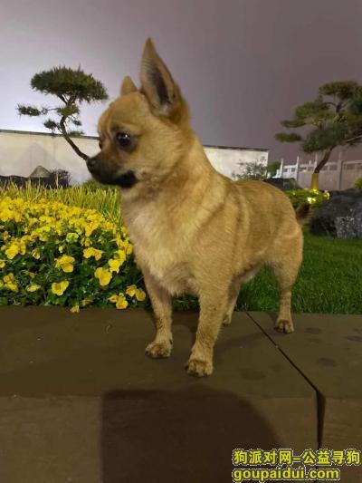 周口寻狗启示,❗️有偿寻狗❗️ ???? ????,它是一只非常可爱的宠物狗狗,希望它早日回家,不要变成流浪狗。