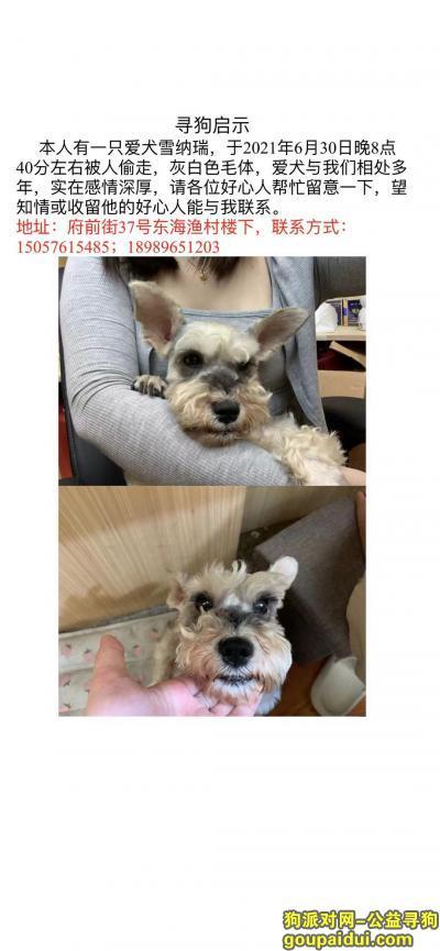 温州寻狗网,爱犬雪纳瑞,于2021年6月30日晚8点40分左右在府前街被人偷走,它是一只非常可爱的宠物狗狗,希望它早日回家,不要变成流浪狗。