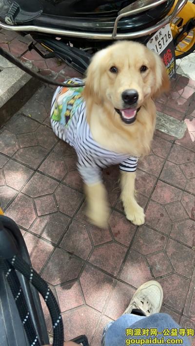 韶关找狗,铁龙镇坳下6月7.8号左右丢的,它是一只非常可爱的宠物狗狗,希望它早日回家,不要变成流浪狗。