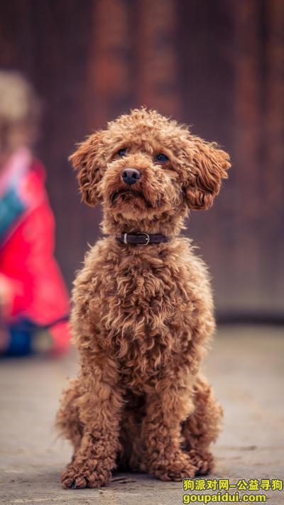 烟台寻狗启示,龙口市西城区寻狗启示,它是一只非常可爱的宠物狗狗,希望它早日回家,不要变成流浪狗。