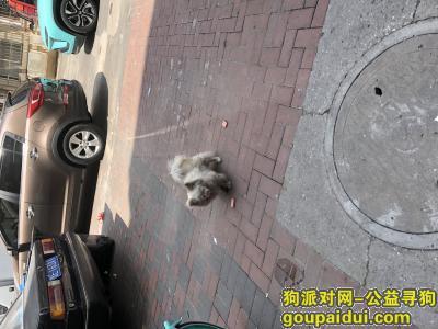 捡到狗,塘沽区  二号路附近  一只小白狗 这两天变黑了,它是一只非常可爱的宠物狗狗,希望它早日回家,不要变成流浪狗。