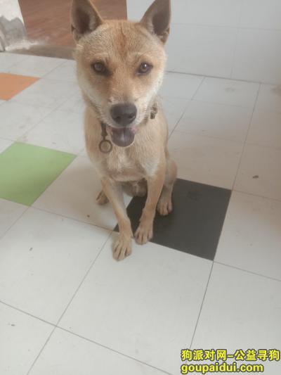 芜湖寻狗启示,。。。。。。。。。。。。。。。。。。。。。。。。。。。。。。。。。。。。。,它是一只非常可爱的宠物狗狗,希望它早日回家,不要变成流浪狗。