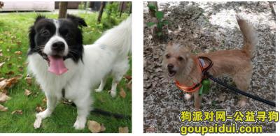 淄博找狗,淄博淄川赵瓦村寻找2只狗狗,它是一只非常可爱的宠物狗狗,希望它早日回家,不要变成流浪狗。