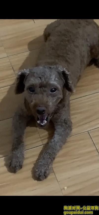 贵港找狗,贵港港北本人寻狗启示,它是一只非常可爱的宠物狗狗,希望它早日回家,不要变成流浪狗。