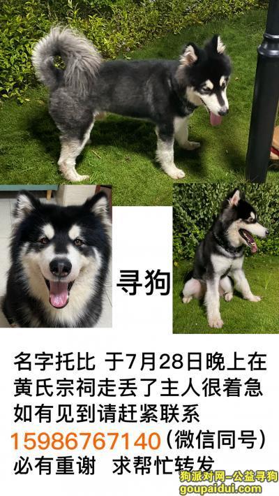 广州找狗,寻狗启示 于7月28日晚上在广州市白云区黄氏宗祠走丢了,主人很着急、很担心,它是一只非常可爱的宠物狗狗,希望它早日回家,不要变成流浪狗。