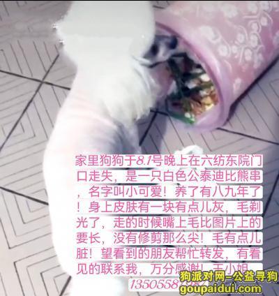 阜阳寻狗启示,白色公泰迪比熊串,叫小可爱!8.2号晚上阜阳颍州区六纺家属院走失!,它是一只非常可爱的宠物狗狗,希望它早日回家,不要变成流浪狗。