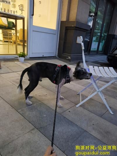 青岛找狗,寻狗启示  黑白边牧 剃了毛 戴着灰色反光项圈上有电话,它是一只非常可爱的宠物狗狗,希望它早日回家,不要变成流浪狗。