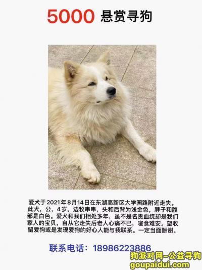 武汉寻狗启示,武汉东湖高新区大学园路酬谢五千元寻找狗狗,它是一只非常可爱的宠物狗狗,希望它早日回家,不要变成流浪狗。