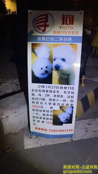 苏州寻狗,苏州 东蒋家场寻找比熊,它是一只非常可爱的宠物狗狗,希望它早日回家,不要变成流浪狗。