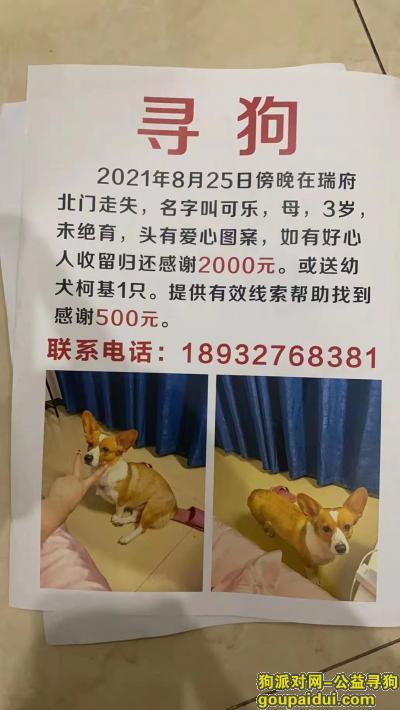 找狗网,石家庄瑞府北门酬谢2000元寻找柯基犬,它是一只非常可爱的狗狗,希望狗狗早日回家,不要变成流浪狗。