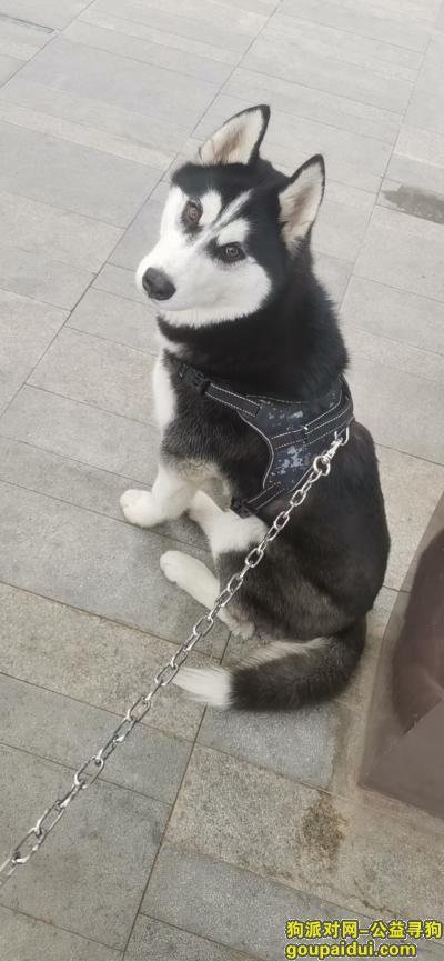 寻狗网,老二,提供有效线索1000 帮忙找到的大哥现场3000,它是一只非常可爱的狗狗,希望狗狗早日回家,不要变成流浪狗。