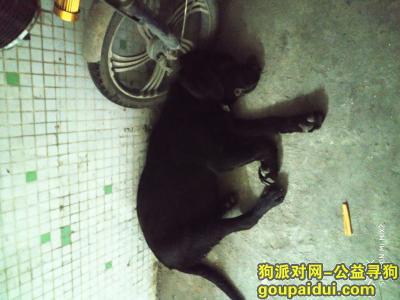 捡到狗,广州市白云区嘉禾望岗小学这里,看到一只貌似走丢的狗狗,在这里睡了一天。,它是一只非常可爱的宠物狗狗,希望它早日回家,不要变成流浪狗。
