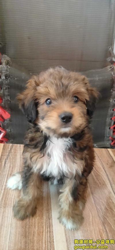 【金华找狗】,求求大家帮忙找下狗狗,它是一只非常可爱的宠物狗狗,希望它早日回家,不要变成流浪狗。