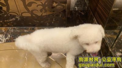 捡到狗,浙江温州鹿城江滨路绿城广场-捡到一只中型犬,它是一只非常可爱的宠物狗狗,希望它早日回家,不要变成流浪狗。