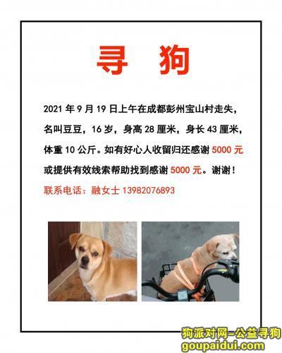 【成都找狗】,成都彭州宝山村寻狗找到重谢5000元,它是一只非常可爱的宠物狗狗,希望它早日回家,不要变成流浪狗。
