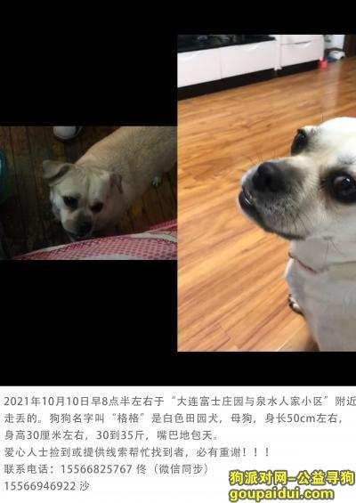大连泉水人家小区附近丢狗,找到必有重谢!!!,它是一只非常可爱的宠物狗狗,希望它早日回家,不要变成流浪狗。
