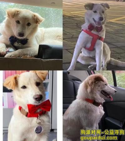 德阳寻狗启示,中江寻狗,忘大家帮我留意一下,它是一只非常可爱的宠物狗狗,希望它早日回家,不要变成流浪狗。