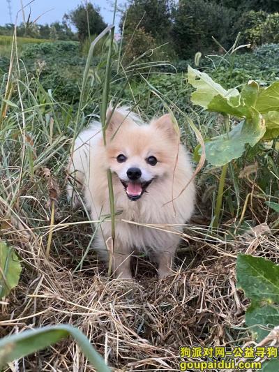 苏州找狗,大家帮忙,救救孩子吧!,它是一只非常可爱的宠物狗狗,希望它早日回家,不要变成流浪狗。
