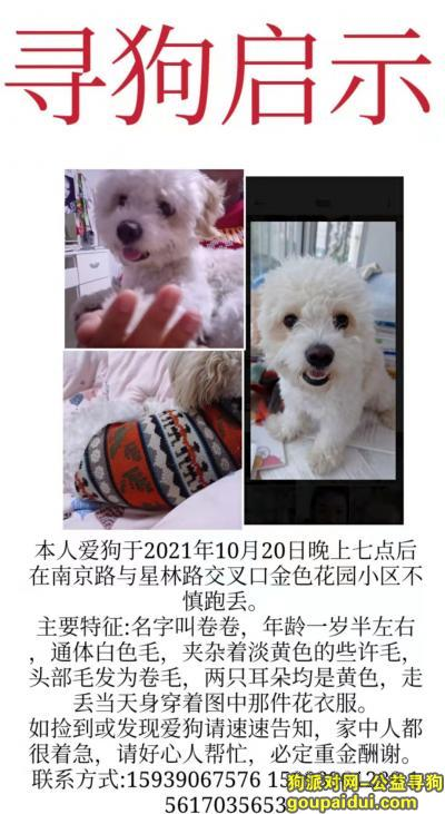 找狗,白色卷毛 夹杂淡黄毛 花衣服,它是一只非常可爱的狗狗,希望狗狗早日回家,不要变成流浪狗。